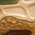 Pangaea, (detail) – Earthenware Clay, 2010.png